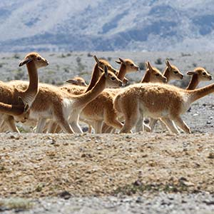 testimonial-featured-reserve-vicunas-arequipa.jpg