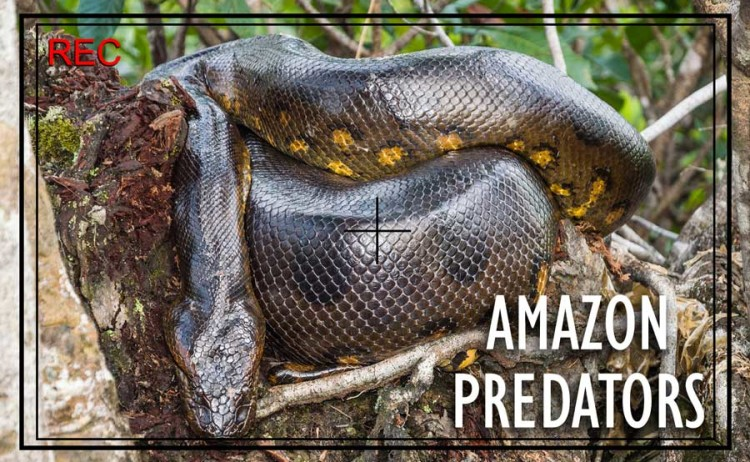 Top Predators to Photograph on Your Private Amazon Holiday