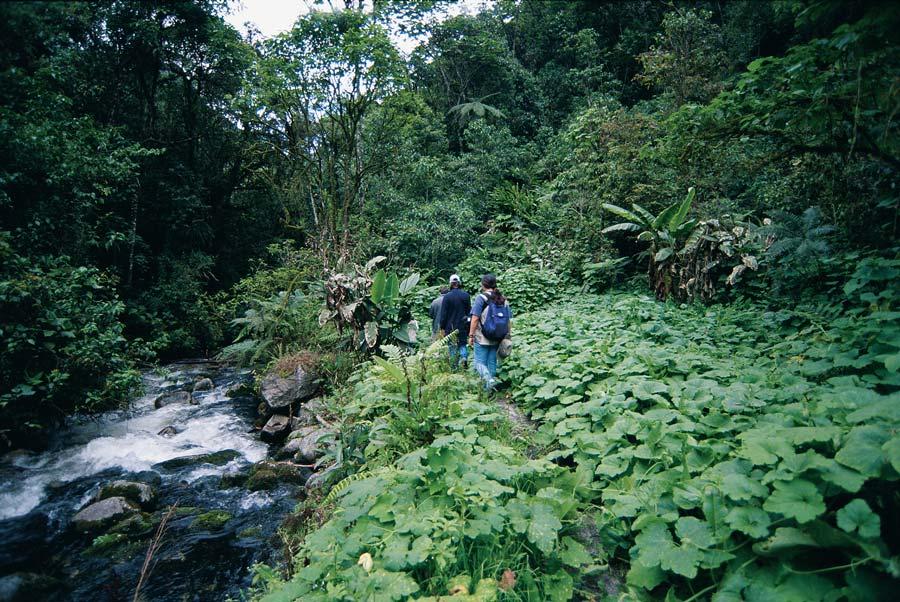 kuoda-blog-inkaterra-machu-picchu-jungle-excursions.jpg