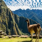 testimonial-featured-llama-machu-picchu