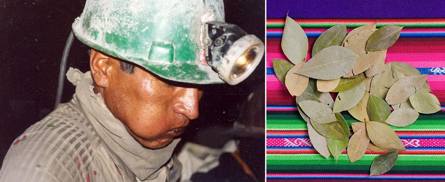 coca-leaf-ancestral-miner-chewing-coca