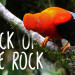 Andean Cock of the Rock: Peru's National Bird