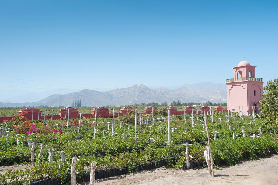 kuoda-blog-pride-tradition-vineyard-peru.jpg