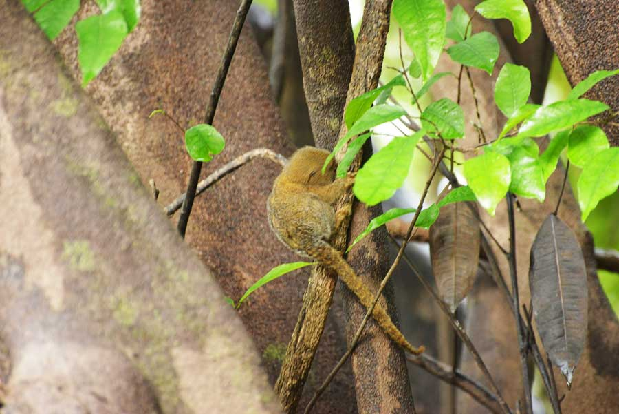 kuoda-blog-wildlife-spotlight-peru-monkeys