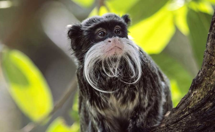Big Eyes, Yellow Hands, and Crazy Hair: Discovering Peru's Monkeys