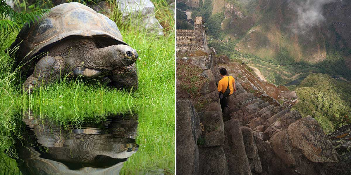Explore the best of Peru and Ecuador with a customized Galapagos and Machu Picchu tour