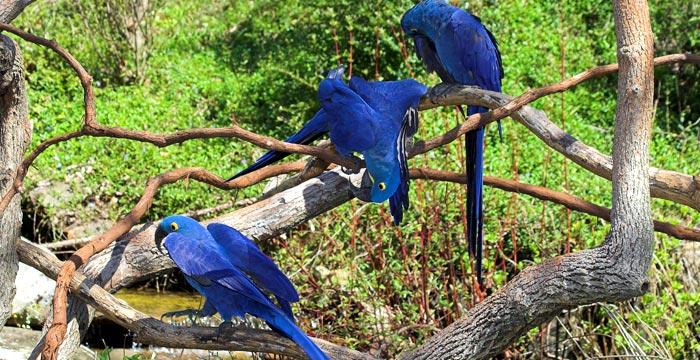 bird-watching.jpg