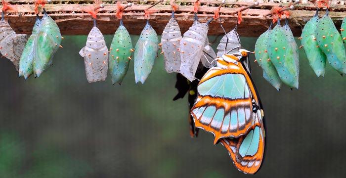 butterfly-farm.jpg