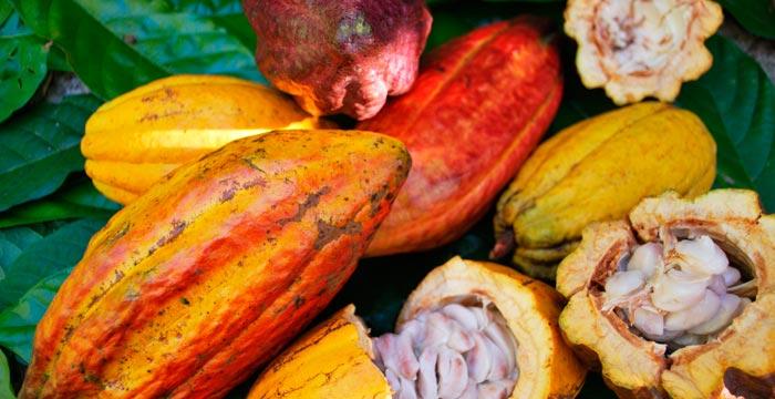 cacao-vitality