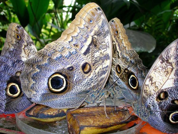 pacha-peru-blog-arequipa-vs-iquitos-butterflies-eyes