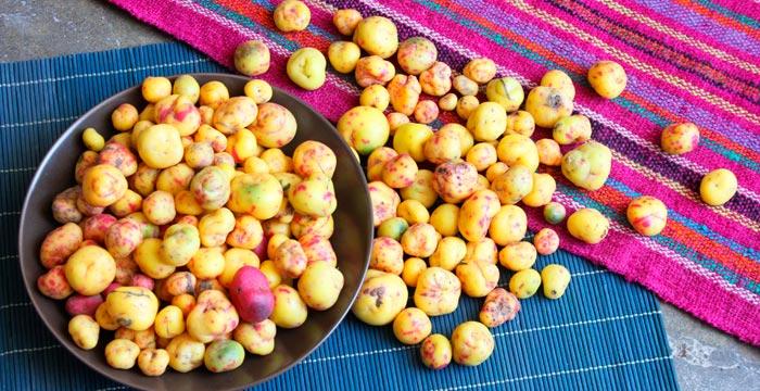 olluco-food-vitality.jpg