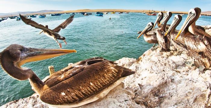 paracas-islas-ballestas