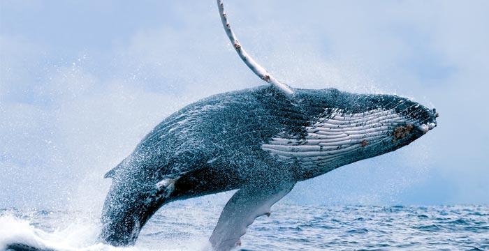 whales-marine-mammals