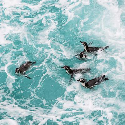 aa-swim-with-wildlife.jpg