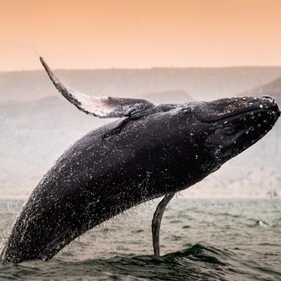 aa-whale-watching.jpg