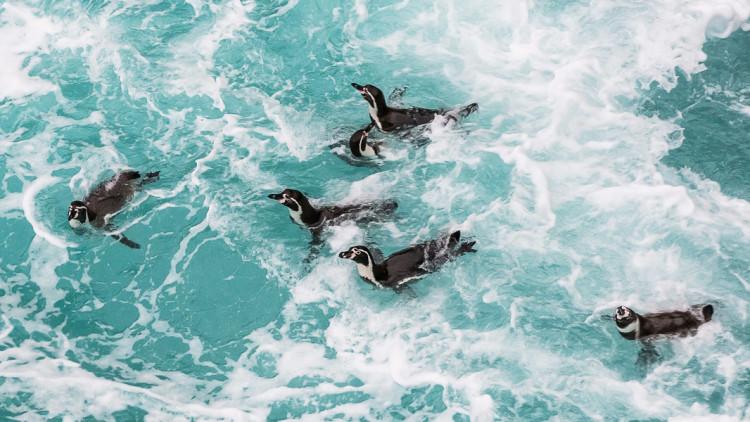 fa-swim-with-wildlife