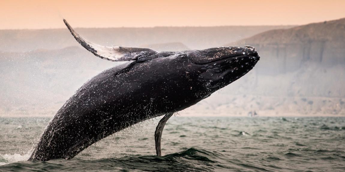 fa-whale-watching.jpg