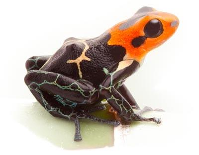 inter-new-species-of-frog.jpg