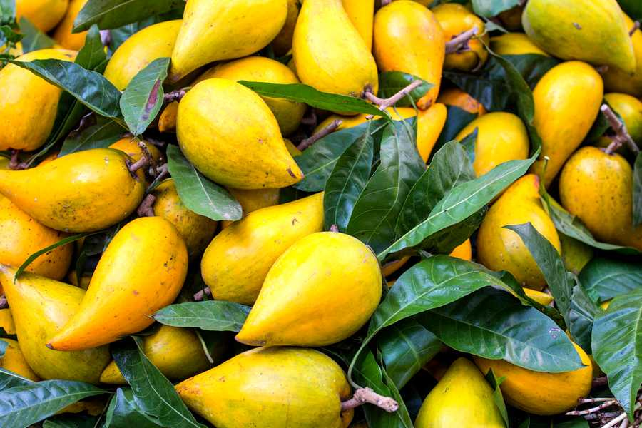 3-Exotic-Fruits-To-Try-When-You-Visit-Peru-lucuma