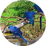 ico-amazon-river-iquitos-bird-spotting