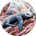 ico-beaches-exotic-wildlife