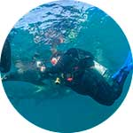 ico-galapagos-swimming-with-sea-lions