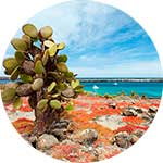ico-galapagos-wonder-islands