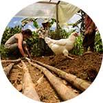 ico-manu-eco-tourism.jpg