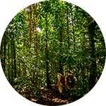 ico-manu-jungle-treks.jpg