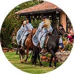 ico-trujillo-peruvian-paso-horse