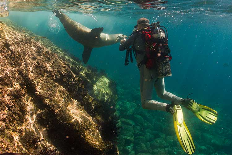 Snorkel and dive in the Galapagos