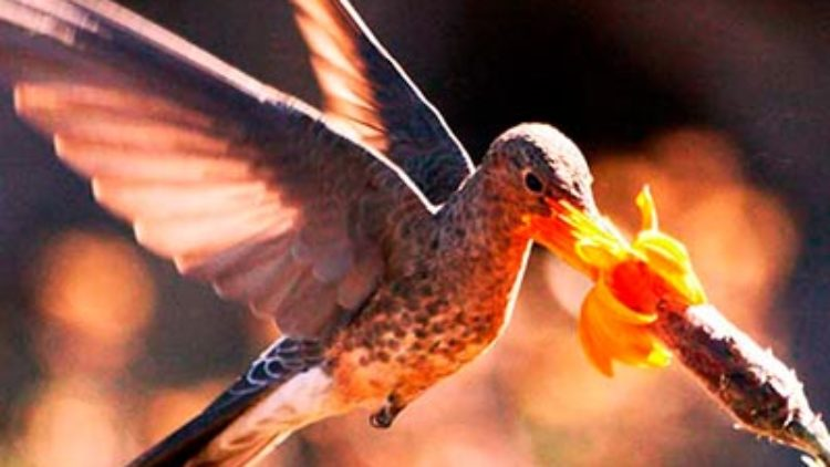 El Comercio Reveals List of Best Routes for Birdwatching in Peru