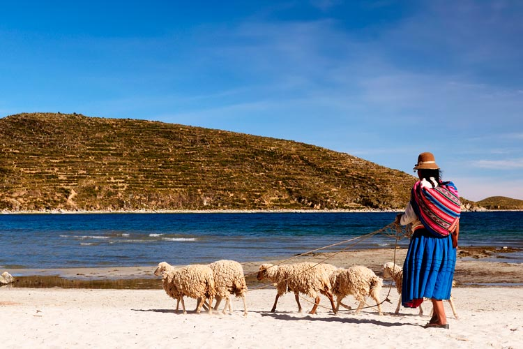 The Wondrous Wildlife of Lake Titicaca in Peru and Bolivia