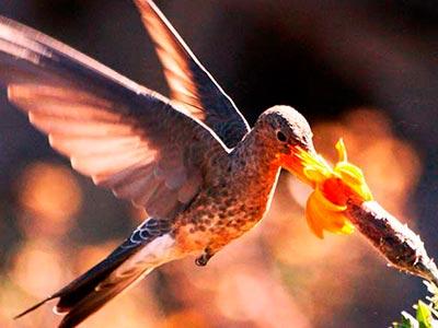 Birding Kuoda