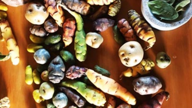 Potatoes Are Becoming More Than Just an Agricultural Crop in Peru