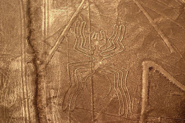 Nazca Lines, Spider