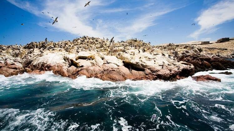 Travel to Peru's Galápagos– aka The Ballestas Islands, on Your Peru Private Tour