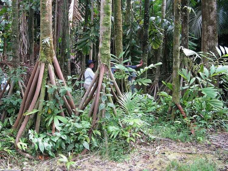rainforest peruvian trip