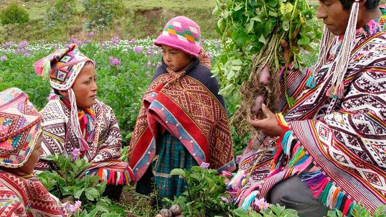 Inca's Food Preservation – A Gift to the World – Part1