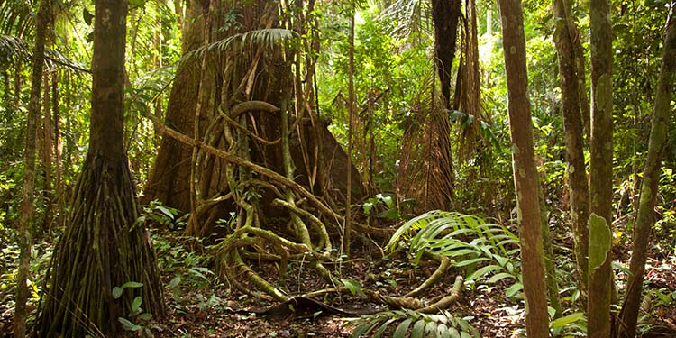 Chullachaqui Amazon Peru