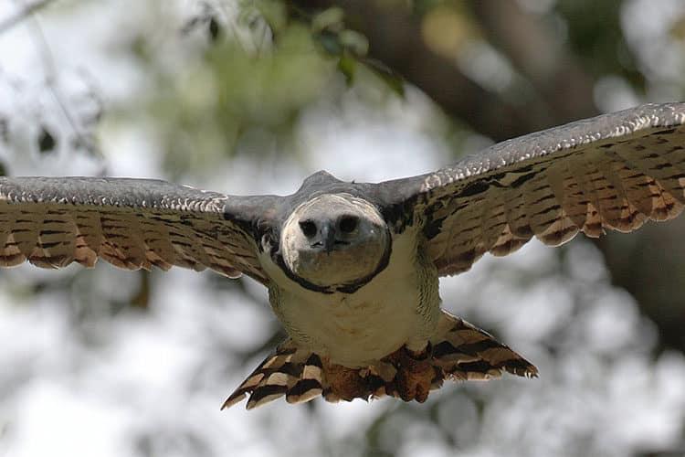 Six Intriguing Birds of Peru