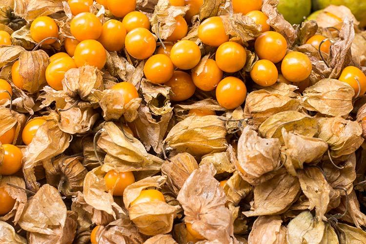 Peruvian fruits aguaymanto
