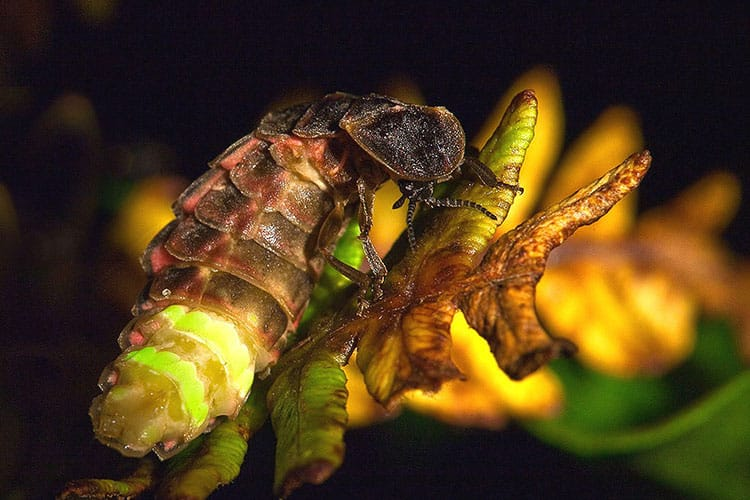 strange creepy crawlers in peru