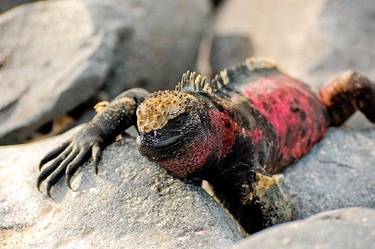 The Galapagos Islands & Charles Darwin