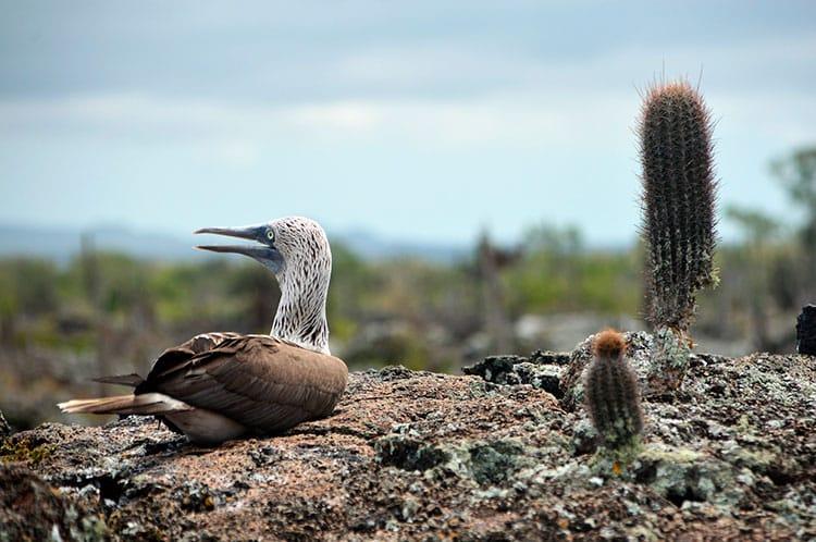 Galapagos island travel Ecuador