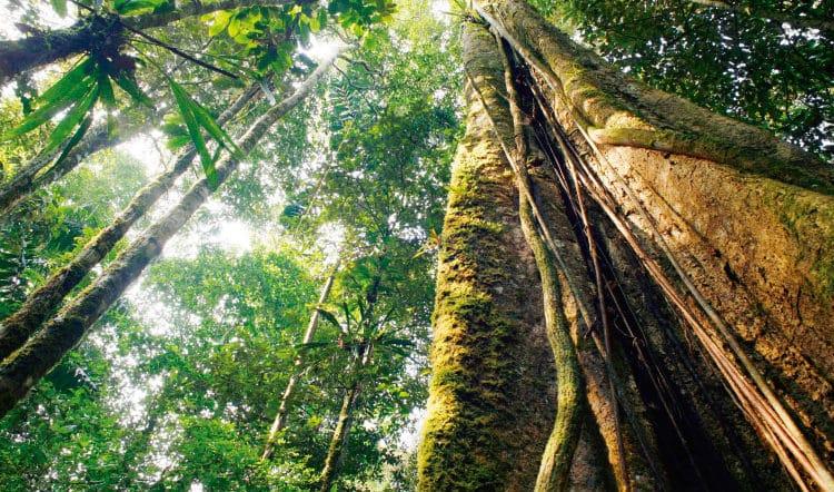 Environmental Impact of COVID-19