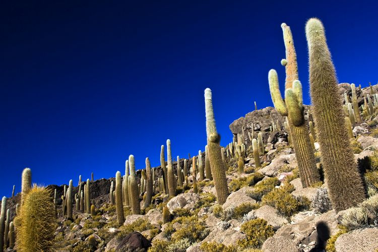 Quebrada del Toro Salta Argentina