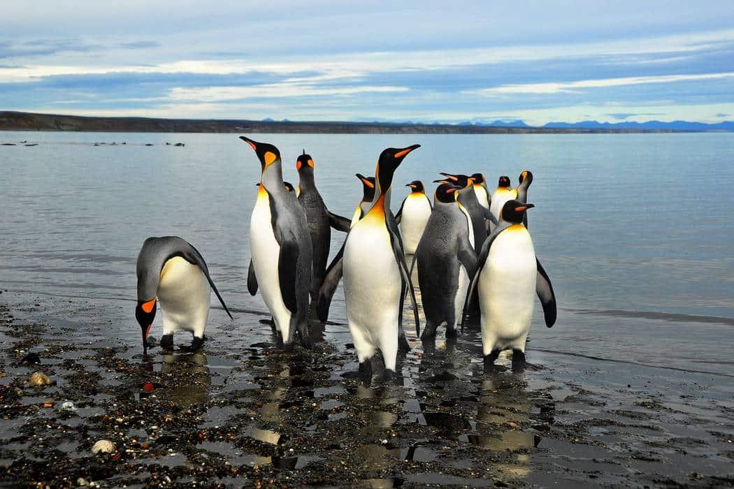 Tierra del Fuego Patagonia Argentina