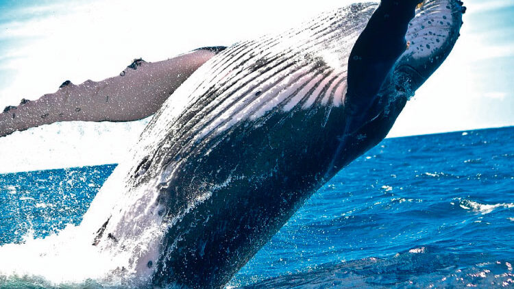 Among Giants Best Whale Watching Spots in South America