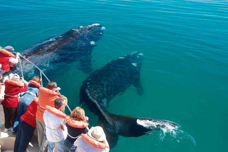 Whales in Argentina